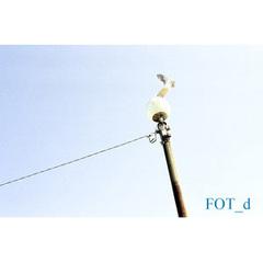 Fot_d_2